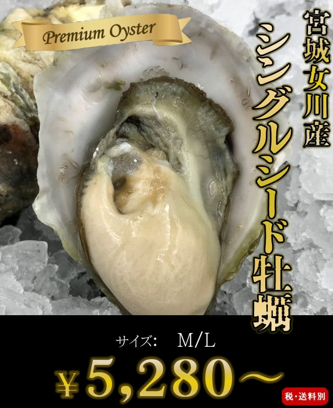 画像1: 三陸女川産 シングルシード牡蠣 (1)