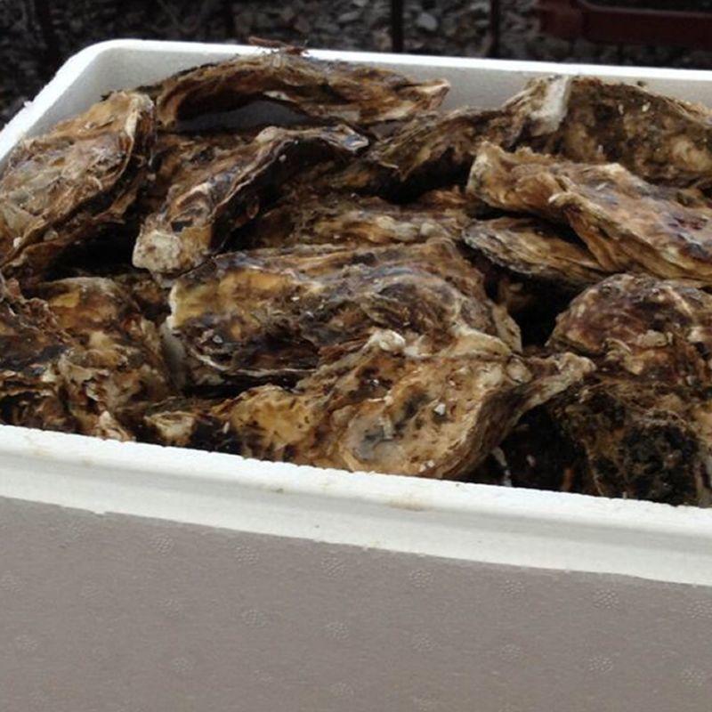 画像1: 三陸広田湾産 冷凍ふぞろい牡蠣  (1)