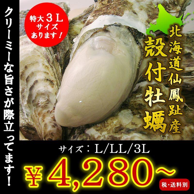 画像1: 北海道仙鳳趾産 殻付牡蠣 (1)