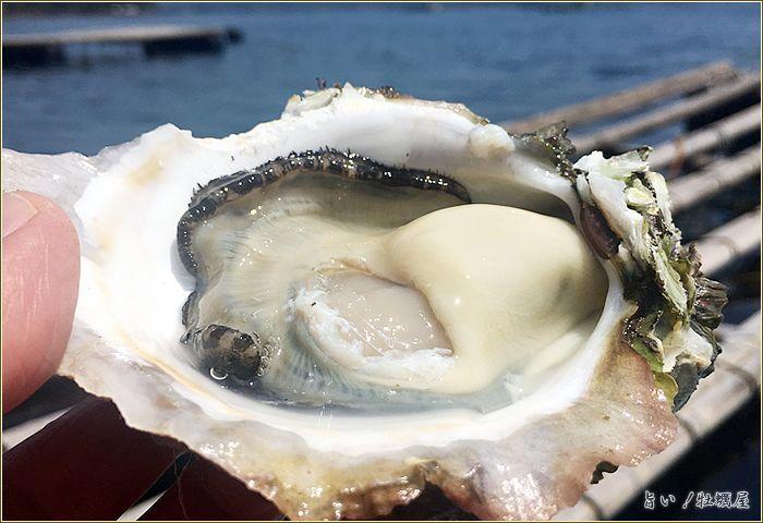 鹿児島諸浦島の岩ガキ「天海岩牡蠣」