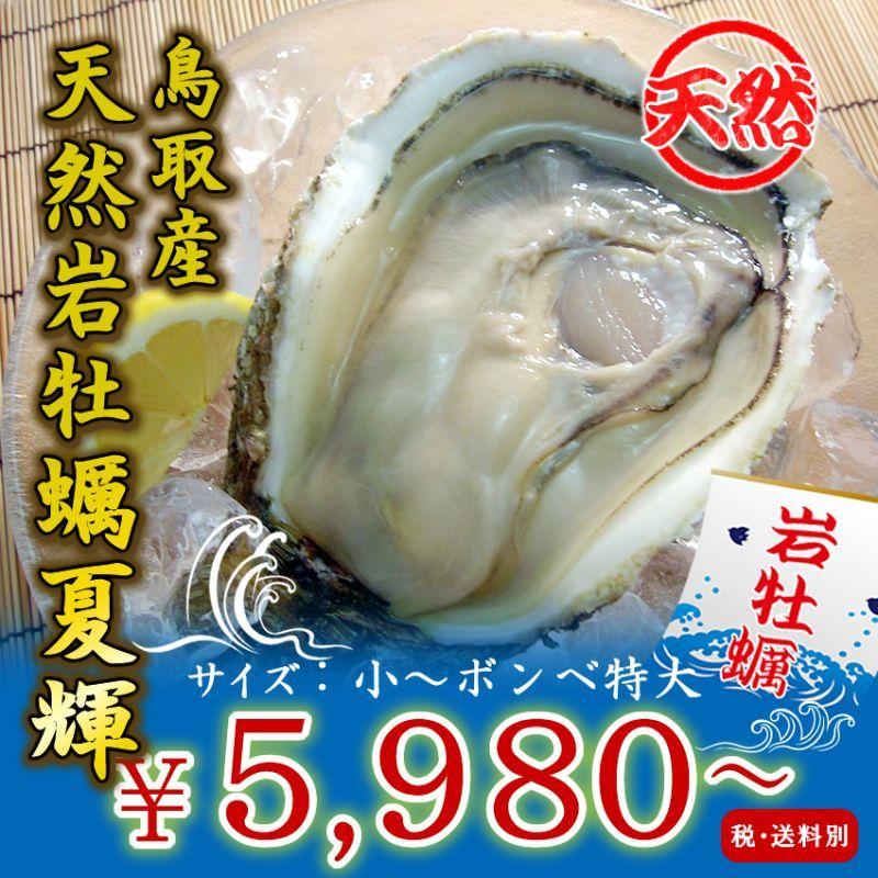 鳥取産 天然岩牡蠣「夏輝」
